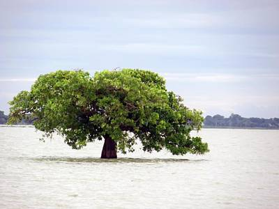 Photograph - Loanly Tree by Daniel Chowdhury