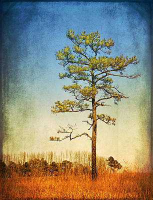 Loblolly Pine Along The Chesapeake Art Print