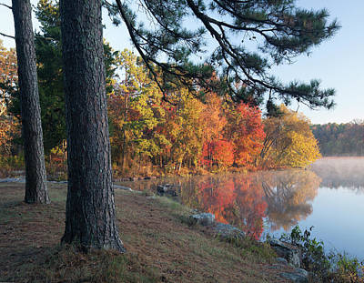 Loblolly Pine On Lake Bailey, Petit Art Print