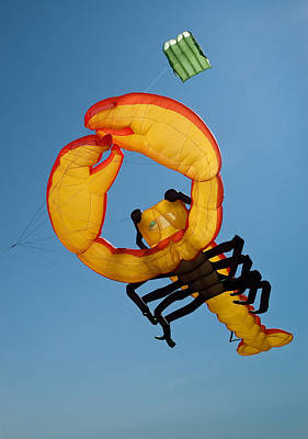 Photograph - Lobster Kite by Rob Huntley