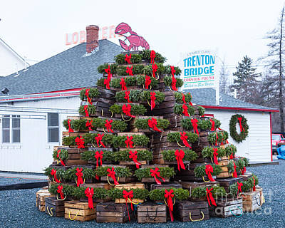 Photograph - Lobster-trap Christmas Tree by Susan Cole Kelly