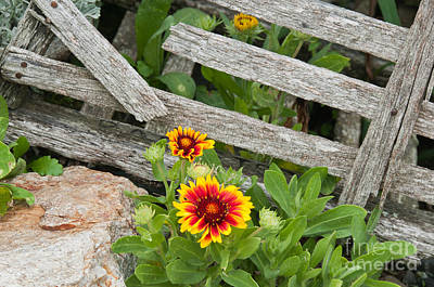 Photograph - Lobster Trap Flowers II by Sharon Seaward
