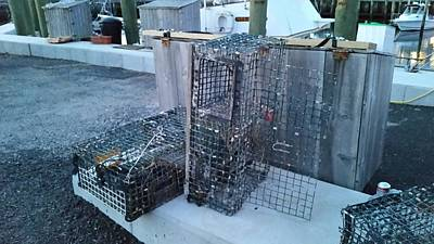 Lobster Trap Photograph - Lobster Traps by Scott Decker