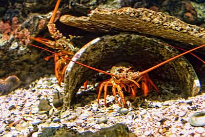 Lobsters At Home In Water Original by Linda Phelps