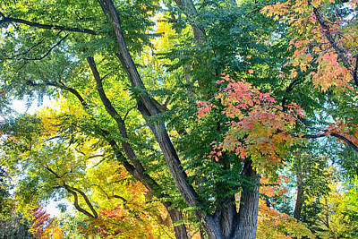 Photograph - Local Fall Foliage by James BO  Insogna