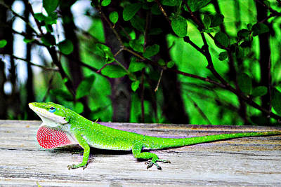 Photograph - Local Lizard by Stephanie Grooms