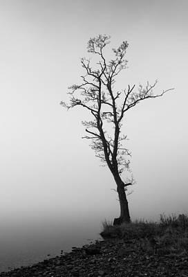 Photograph - Loch Ard Tree by Grant Glendinning