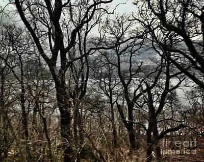 Photograph - Loch Lomond Through The Birches by Joan-Violet Stretch