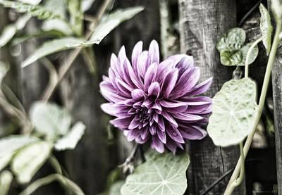 Zaun Photograph - Locked Garden by Miguel Winterpacht
