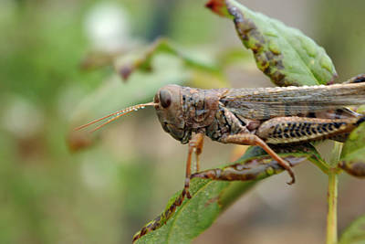 Photograph - Locust Dew by Robyn Stacey