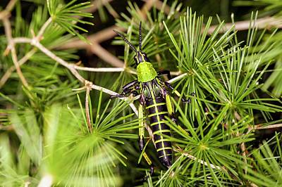 Locust Photograph - Locust In A Bush by Philippe Psaila