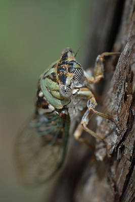 Photograph - Locust by Susan D Moody