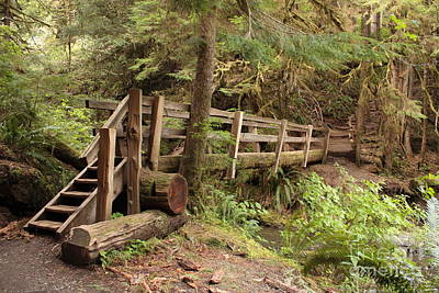 Photograph - Log Bridge In The Rainforest by Carol Groenen