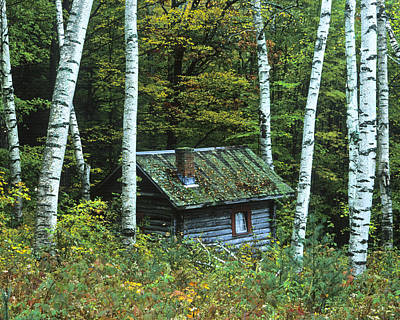 Log Cabin In The Birch Forest Vermont Art Print
