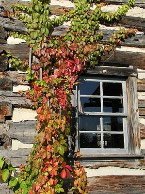 Photograph - Log Cabin Ivy by Jean Goodwin Brooks