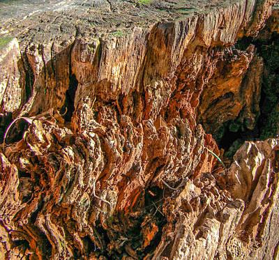 Photograph - Log Canyon by Christy Usilton