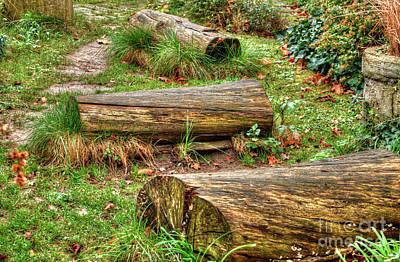 Photograph - Log Path Phoenix Garden by Deborah Smolinske