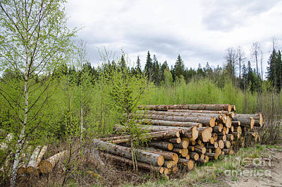 Photograph - Log Pile At Spring by Kennerth and Birgitta Kullman