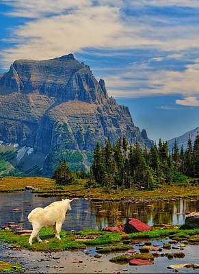 Photograph - Logan Pass In Glacier National Park by Greg Norrell