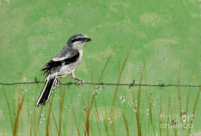 Loggerhead Shrike Art Print by Stefanie Forck