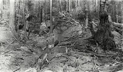 Logging A Redwood Hillside C. 1880 Art Print by Daniel Hagerman