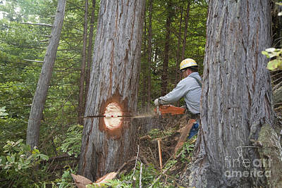 Moody Trees - Logging by Jim West