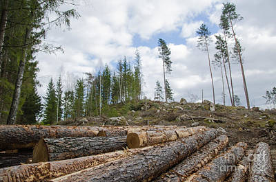 Sweden Photograph - Logpile At A Clear Cut Area by Kennerth and Birgitta Kullman