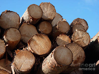 Logs In Sunlight  Art Print