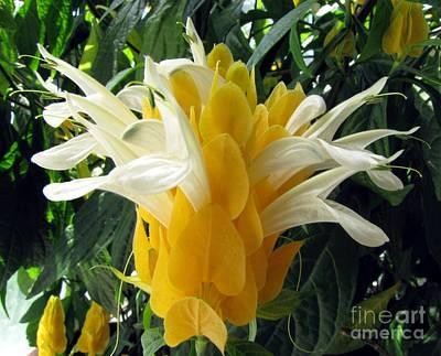Lolliepop Plant Art Print