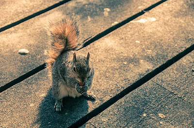 Photograph - London Urban Squirrel by Lenny Carter