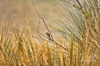 Lone Bird Art Print by Anne Rodkin