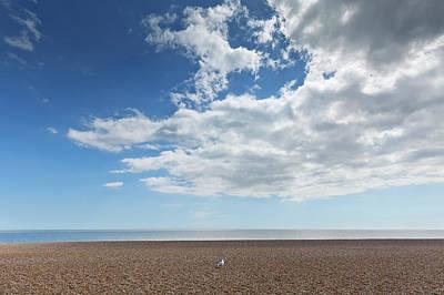 Lone Bird On An Empty Beach With Blue Art Print