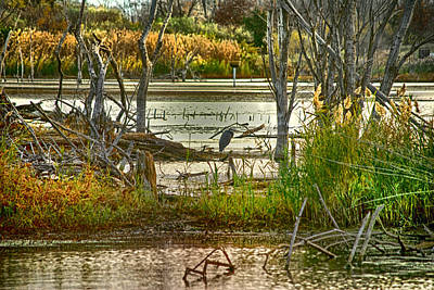 Lone Blue Heron In Fall Art Print by Kimberleigh Ladd