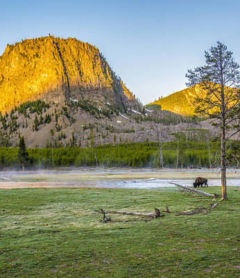 Photograph - Lone Buffalo Yellowstone National Park by James Hammond