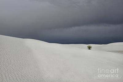 Photograph - Lone Bush In White Sand by David Arment
