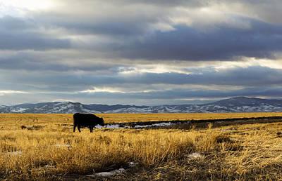 Lone Cow Against A Stormy Montana Sky. Art Print by Dana Moyer