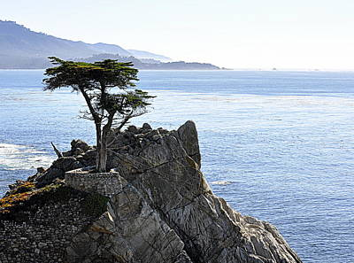 Photograph - Lone Cypress by AJ  Schibig