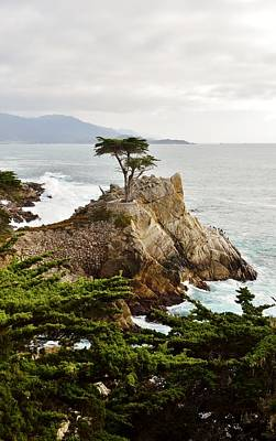 Digital Art - Lone Cypress by Barbara Snyder