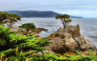 Photograph - Lone Cypress By Diana Sainz by Diana Raquel Sainz