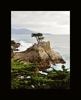 Painting - Lone Cypress Duvet by Barbara Snyder