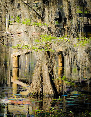Caddo Lake Photograph - Lone Cypress Wading by Geoff Mckay