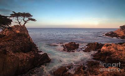 Cyprus Photograph - Lone Cyprus Pebble Beach by Mike Reid