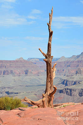 Photograph - Lone Dead Tree On Cedar Ridge South Kaibab Trail Grand Canyon by Shawn O'Brien