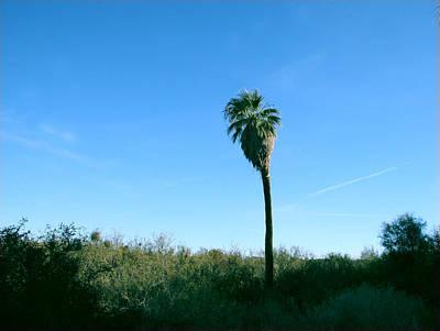 Photograph - Lone Desert Palm by Amelia Painter