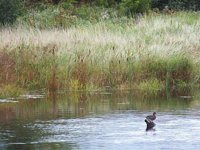 Photograph - Lone Duck by Gene Cyr