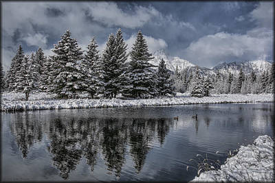 Photograph - Lone Ducks by Erika Fawcett