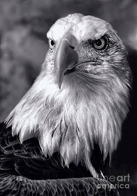 Art Print featuring the photograph Lone Eagle by Adam Olsen