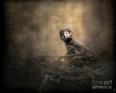 Lone Eaglet In The Nest Art Print by Jai Johnson