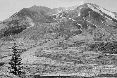 Photograph - Lone Evergreen At Mount St. Helens 2012 Bw by Connie Fox