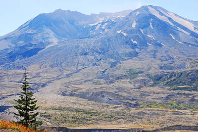 Photograph - Lone Evergreen - Mount St. Helens 2012 by Connie Fox